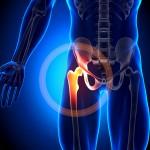 hip pain anatomy